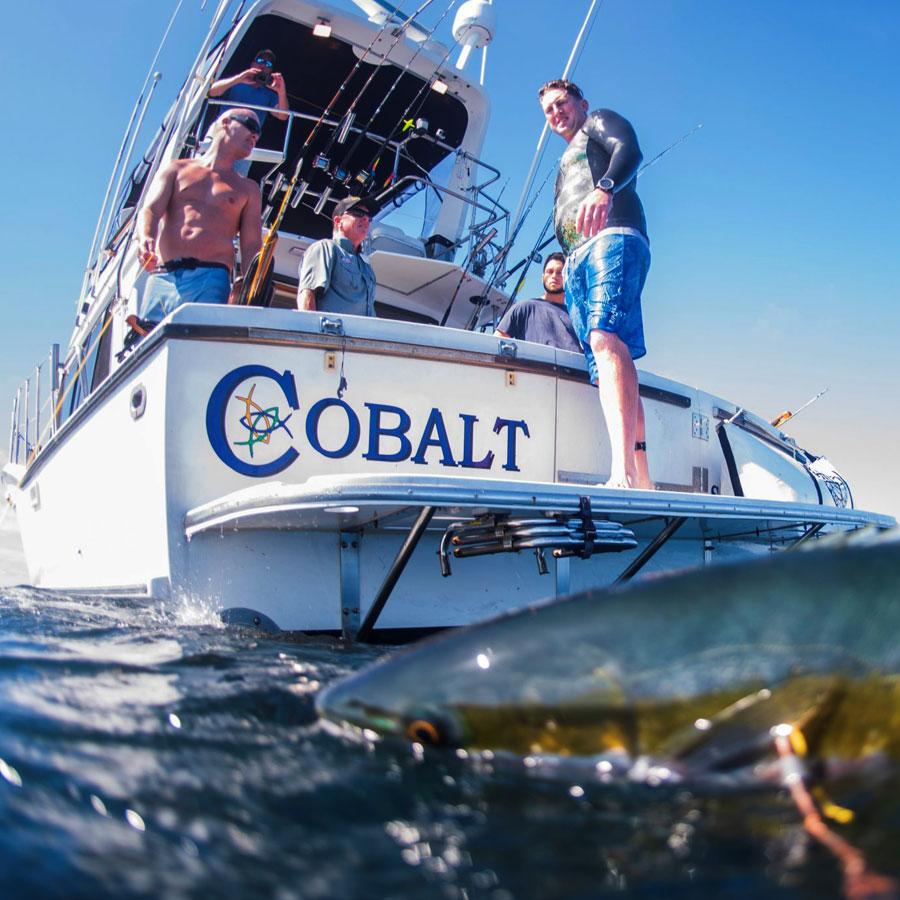 cobalt sportfishing
